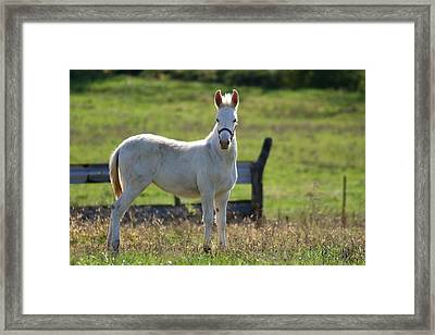 Baby Jack 1 Framed Print by David Dunham