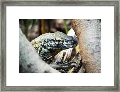 Framed Print featuring the photograph Baby Komodo Dragon by Scott Lyons