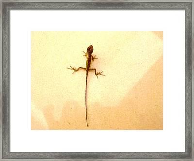 Baby Lizard Framed Print
