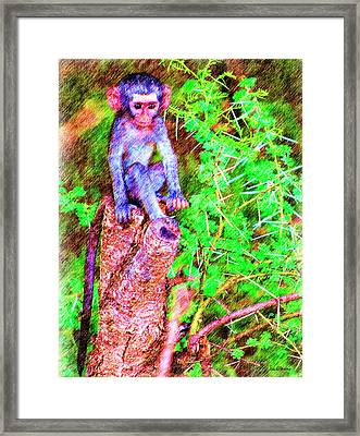 Baby Monkey On A Stump - Drawing Framed Print by Ericamaxine Price