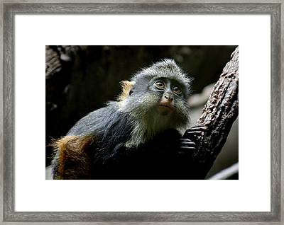 Baby Of The Family Framed Print by Jason Hochman