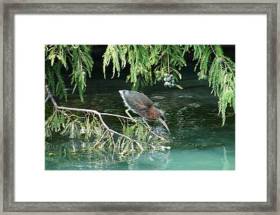 Baby Out On A Limb Framed Print