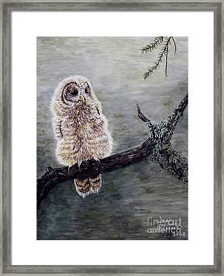 Baby Owl Framed Print by Judy Kirouac