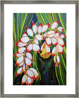Baby Pink Shell Ginger Framed Print by Debbie Chamberlin