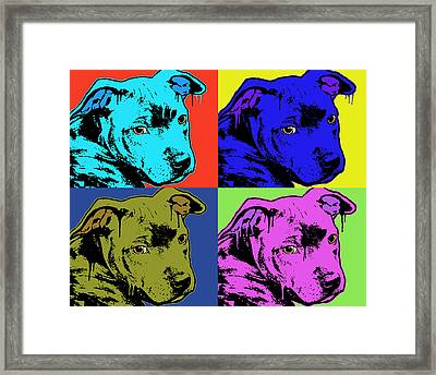 Baby Pit Face Framed Print by Dean Russo