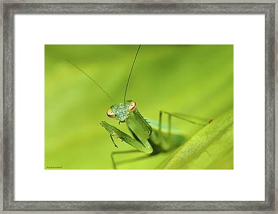 Baby Praymantes 6661 Framed Print by Kevin Chippindall