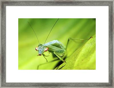 Baby Praymantes 6677 Framed Print by Kevin Chippindall
