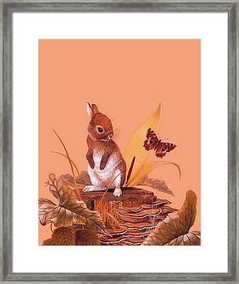 Baby Rabbit Framed Print