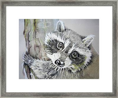 Baby Raccoon Framed Print
