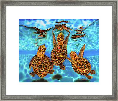 Baby Sea Turtles Framed Print