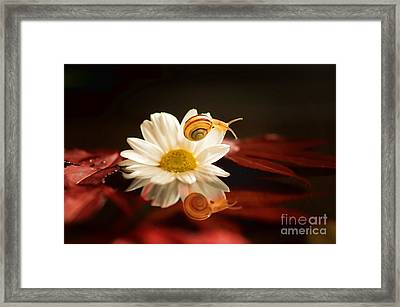 Baby Snail On A Flower In The Water  Framed Print