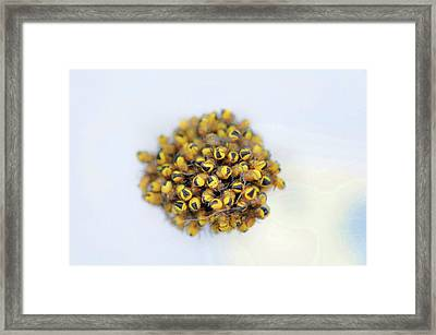 Baby Spiders Framed Print