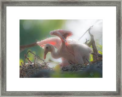 Baby Spoonbill Framed Print