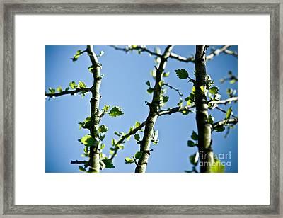 Baby Spring Tree Leaves 01 Framed Print by Ryan Kelly