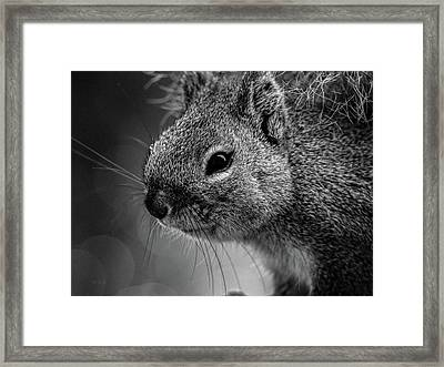 Baby Squirrel Framed Print by Bob Orsillo
