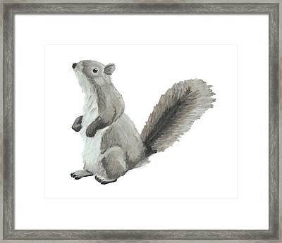 Baby Squirrel Framed Print