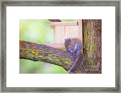 Baby Squirrel In The Tree Framed Print by Sharon McConnell