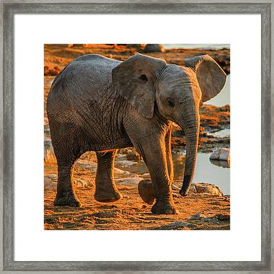 Baby Steps Framed Print