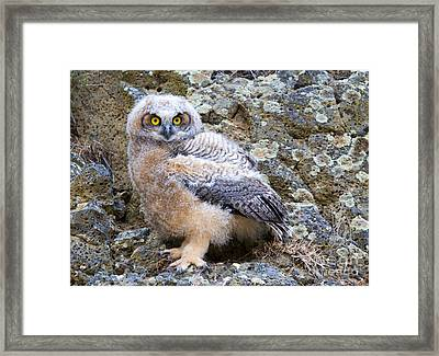 Baby Steps Framed Print by Mike Dawson