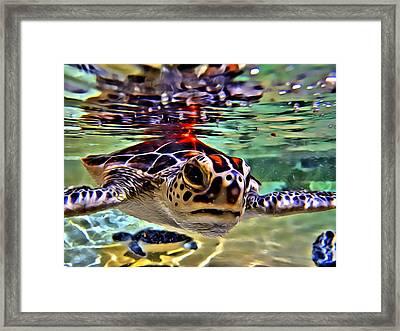 Baby Turtle Framed Print