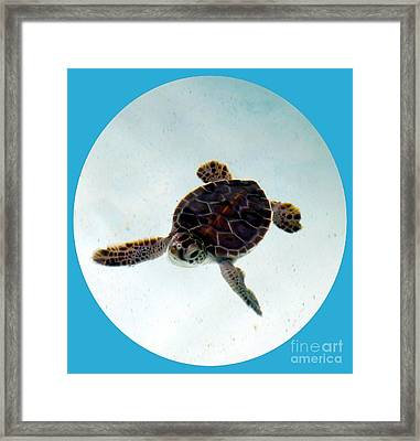 Framed Print featuring the photograph Baby Turtle by Francesca Mackenney