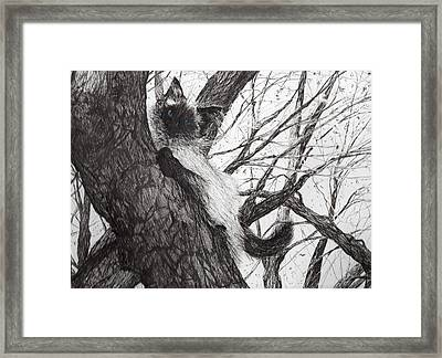 Baby Up The Apple Tree Framed Print