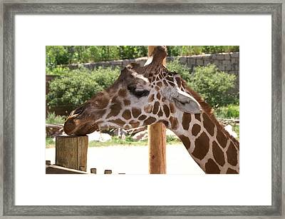 Baby Wants A Cracker Framed Print by Susan Perry