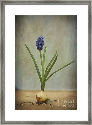 Baby's Breath Framed Print