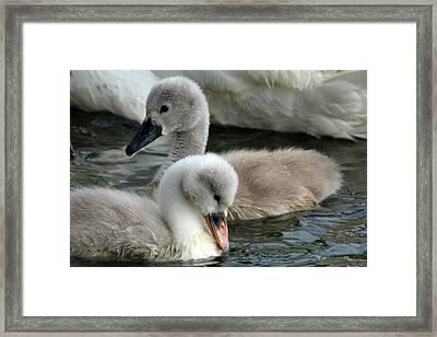 Babys Framed Print