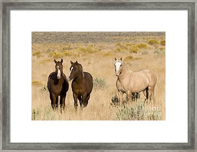 Bachelor Stallions Framed Print by Jean-Louis Klein & Marie-Luce Hubert