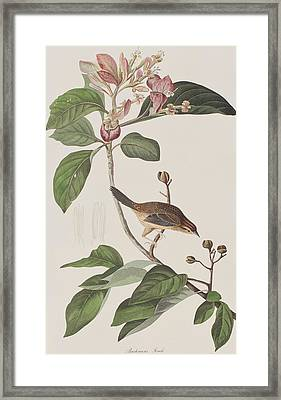 Bachmans Sparrow Framed Print