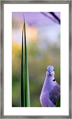 Back At Cha Framed Print by John Glass