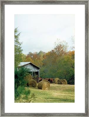 Back At The Barn Framed Print by Jan Amiss Photography