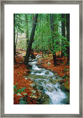 Back Country Creek Framed Print