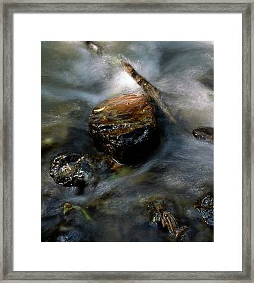 Back Into The Pool Framed Print