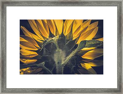Back Lit And Back Facing Framed Print by Chris Fletcher