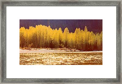 Back Lit Trees By The River Ae 2  Framed Print by Lyle Crump