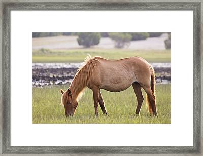 Back-lit Wild Horse Framed Print by Bob Decker