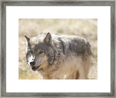 Framed Print featuring the digital art Back Off Buddy by Gary Baird