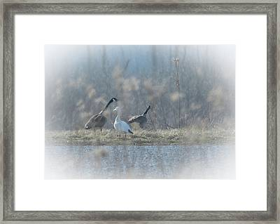 Back Off Framed Print by Nicole Crabtree