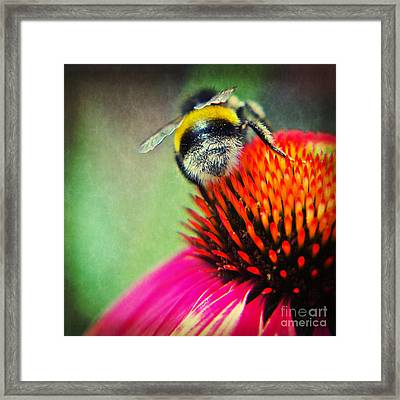 Back Side - Bumble Bee Framed Print by Angela Doelling AD DESIGN Photo and PhotoArt