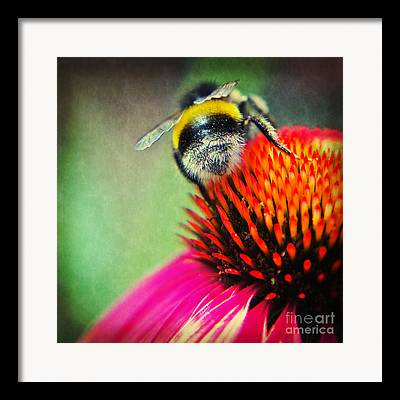Abstracted Coneflowers Mixed Media Framed Prints