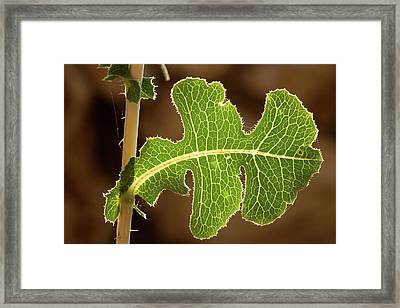Framed Print featuring the photograph Back Side Light On A Leaf At Sunset by Yoel Koskas
