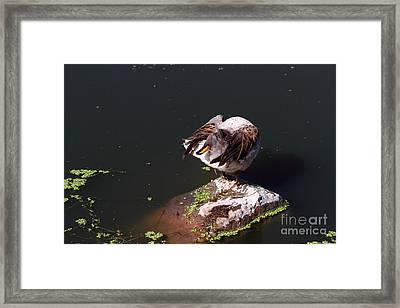 Back To Front Framed Print by James Brunker