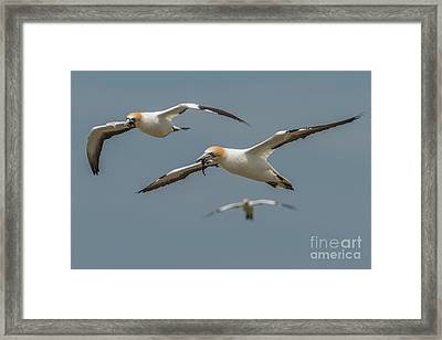 Framed Print featuring the photograph Back To The Colony by Werner Padarin