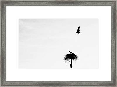 Back To The Nest Framed Print
