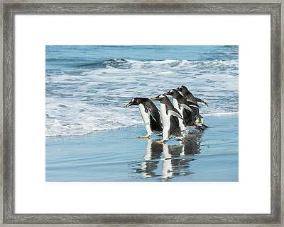 Back To The Sea. Framed Print