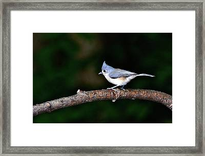 Back Yard Bird Framed Print