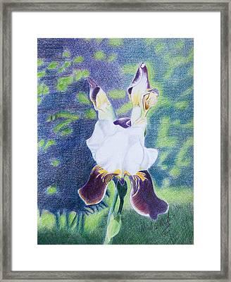 Back Yard Iris Framed Print