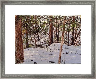Back Yard Snow Framed Print by Sharon  De Vore